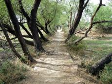 Easy to walk paths at Bharatpur Park, India.